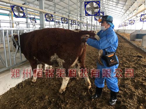 便携式牛用B超仪测孕